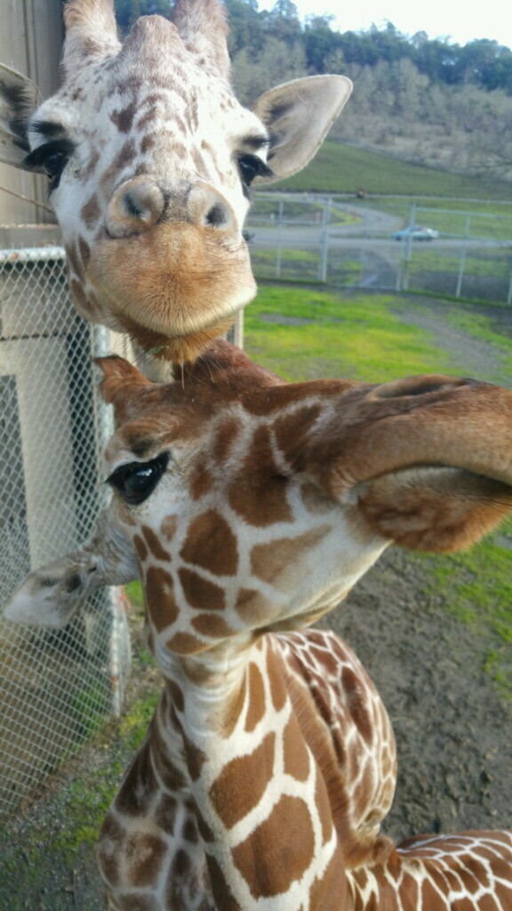 Erin and Miya trying for some keeper attention (or some snacks...) - photo courtesy of Erica Sherrow