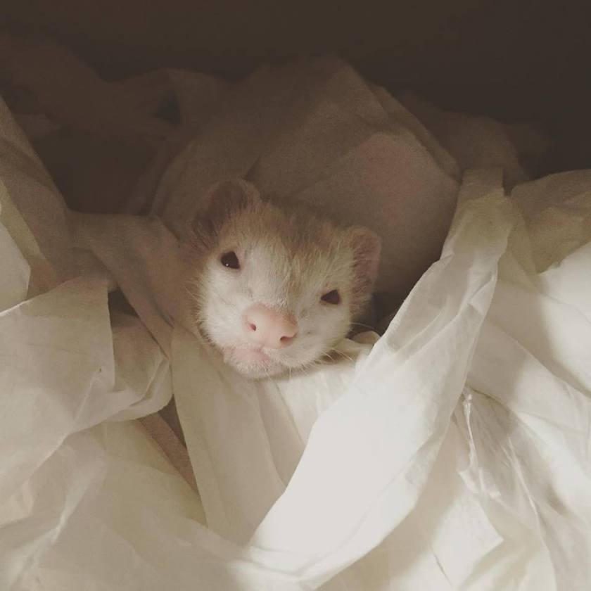 Swiper loves to find new snuggle spots, here he has found some toilet paper for craft.