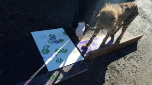Pancake doing a painting session - photo courtesy of Sadie Ryan