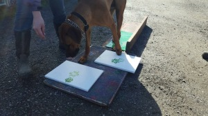 Dayo, the dog paired with Pancake as an ambassador, doing a painting session - photo courtesy of Sadie Ryan