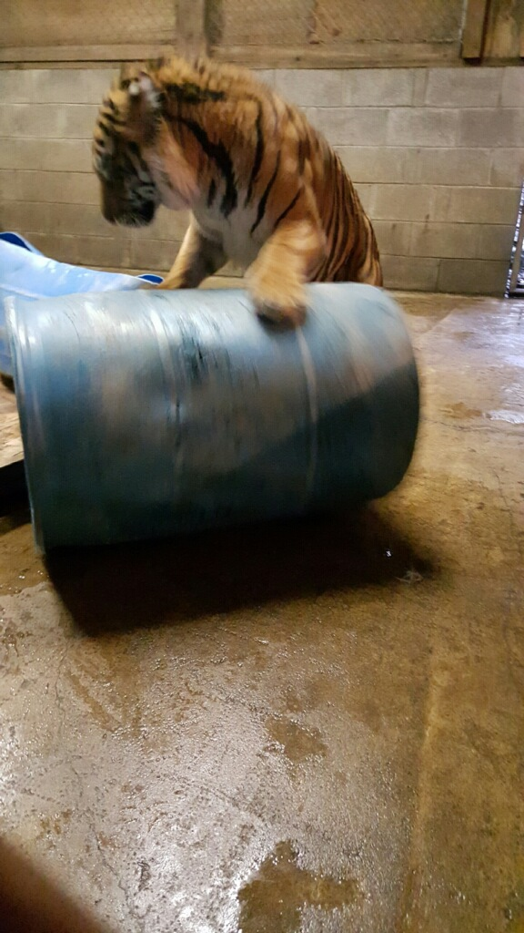 Barrel play time! - Photo courtesy of Taylor Sherrow