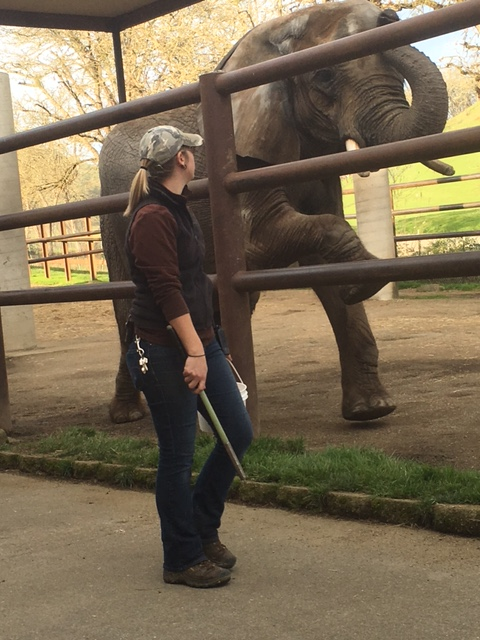 Keeper Tracy with Moja, an African Elephant