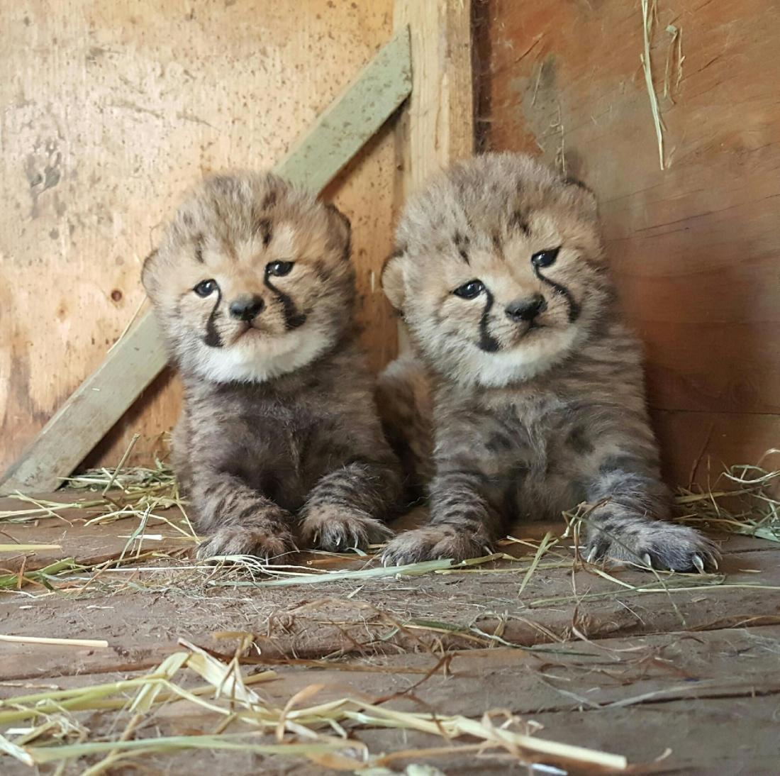 cubs-5