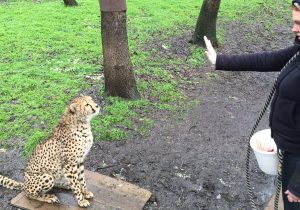 """Pancake knows to go sit on her board when keepers ask her to """"station"""""""