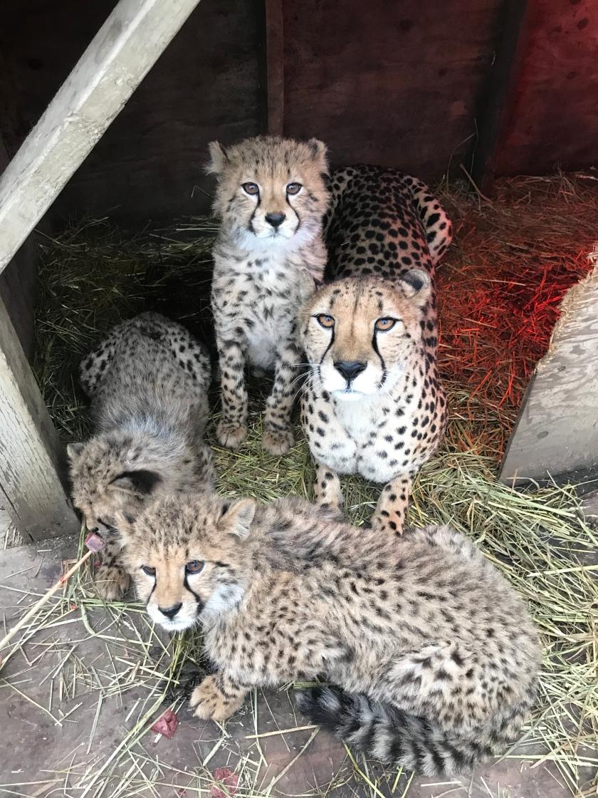 Asanti's Family