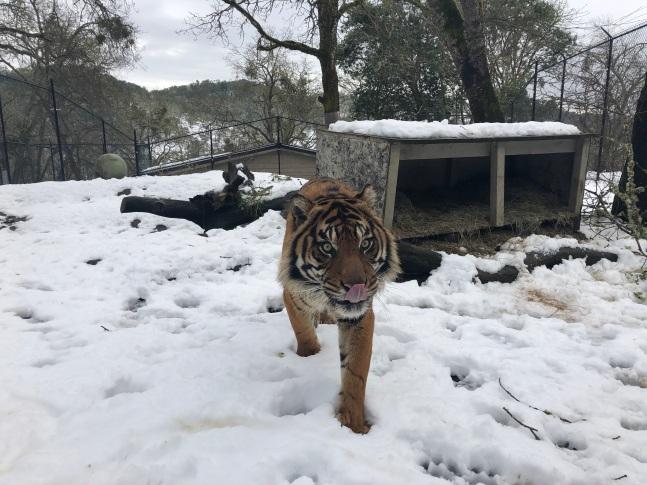dumai snow